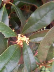 ブロンマ 鶴巻サロン 公園の樹