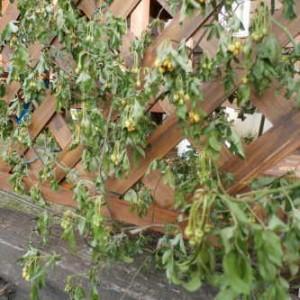 ブロンマ 鶴巻サロン 庭造り