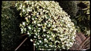 ブロンマ 秦野鶴巻店 季節の花