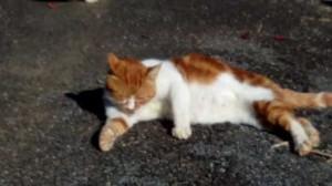 ブロンマ 秦野鶴巻店 猫