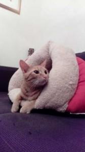 ブロンマ 秦野鶴巻店 猫店長