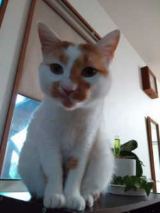 ブロンマ 秦野鶴巻 猫
